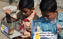 תלמידים אינדונזיים מקבלים אפרוחים
