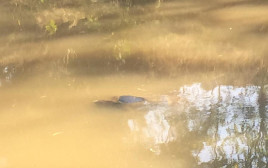 גופת גבר בנחל הירקון