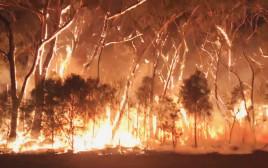 שריפות בדרום מזרח אוסטרליה