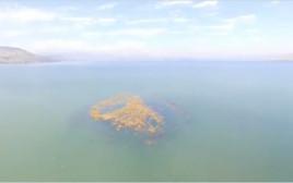 האי בכינרת
