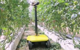 רובוט האבקה לחקלאות