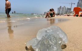 מדוזה בחוף בתל אביב