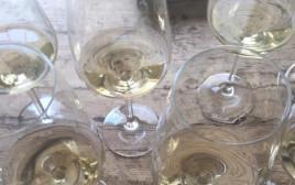 טעימת יינות לבנים
