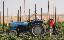 חקלאות בערבה