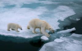 ההתחממות הגלובלית: המסת הקרחונים בקטבים; סופות שלגים וטמפרטורות קפואות באזורים אחרים