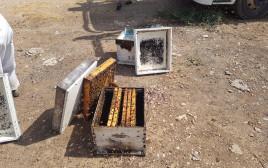 גניבת חלת דבש