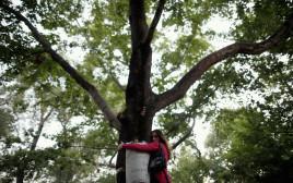אישה מחבקת עץ, אילוסטרציה