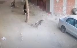 החתול מציל את הילד מתקיפת כלב