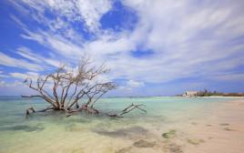 חוף ים, אילוסטרציה