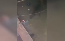 התנין שוחה מתחת למים בחדר המשחקים במקסיקו