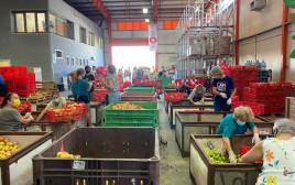 מרכז המתנדבים בקורונה