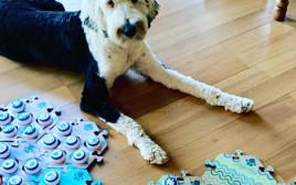 באני הכלבה ומתקן הכפתורים שלה