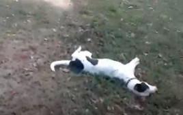 הכלב שנורה בידי שוטר