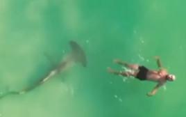 כריש פטיש שוחה מתחת לגבר שצף במים