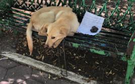 הכלב מקס על הספסל בפארק במקסיקו
