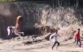 נמר בנגלי ענק רודף אחרי שלושה גברים בהודו