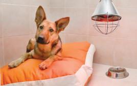 התרמה למען כלבים נטושים