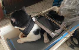"""אחד מהחתולים שעברו התעללות על פי החשד בדירה בראשל""""צ"""