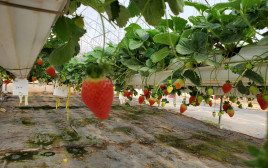 חקלאות מתקדמת בנגב
