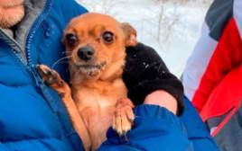 הכלבה שחולצה מהשלג