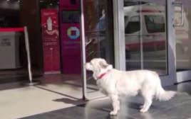 הכלבה בונקוק ממתינה בפתח בית החולים