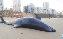 דולפין על החוף