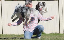 לרלהאם ושני הכלבים וויש והלו