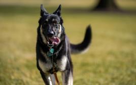 מייג'ור, הכלב הנשיאותי של משפחת ביידן במדשאות הבית הלבן