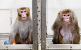 הקופים במעבדה של אילון מאסק