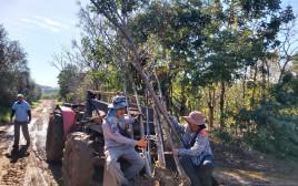 מבצע הצלת העצים בגוש דן