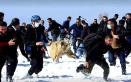 מתקפת הדובים