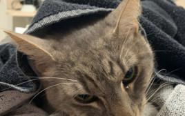 החתול ארתור ברגעיו האחרונים