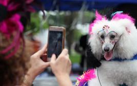 כלבים מחופשים בקרנבל בריו