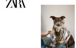 זארה, קולקציית כלבים