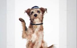 הכלבים שהוצגו כיהודים במסגרת יהדות התורה