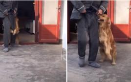 הכלב מתלווה לבעליו