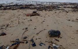 הזפת שנפלטה מהים בחופי חוף הכרמל