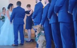 הגולדן רטריבר בחתונה של בעליו