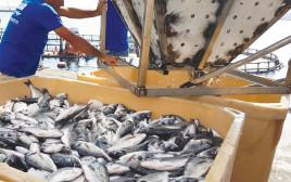 דגים בחוות גידול