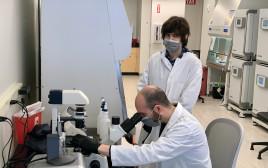 בינה מלאכותית למיפוי ופענוח מערכת החיסון