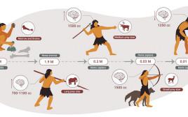 תרשימי מחקר התזונה של האדם הקדמון