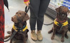 אימון כלבי שירות בפומבי