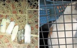 הברחת סמים לכלא באמצעות חתולים