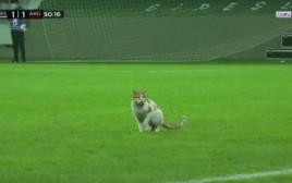 החתול במגרש הכדורגל בטורקיה