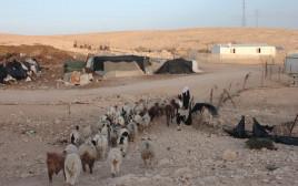 עדר כבשים סמוך ליישוב בדואי בנגב אלנה פרינו, פלאש 90