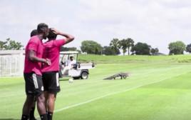 התנין שהתפרץ למגרש הכדורגל בזמן אימון