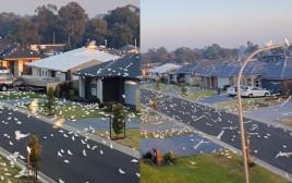 אלפי ציפורים השתלטו על רחובות ניו סאות' ווילס