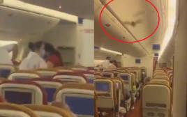 עטלף במטוס שהמריא מהודו