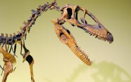 שלד של דינוזאור