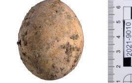 הביצה שנמצאה בחפירות הארכיאולוגיות